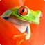 Red-Eyed Tree Frog 3D Coaster